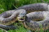 snake - 166260557