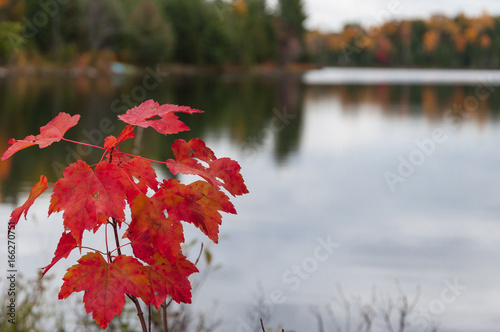 Foto op Canvas Canada Autumn in Ontario