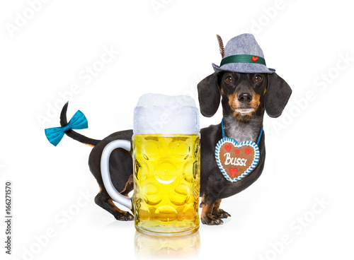 Foto op Canvas Crazy dog bavarian beer dog