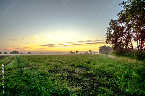 Tuinposter Ochtendgloren Green meadow at sunrise and fog