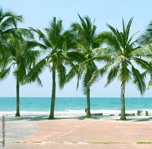 Foto op Plexiglas Tropical strand Palm coconut tree