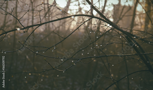A wet tree branch with dew on the background