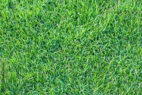 Close up green grass field texture background,nature backdrop