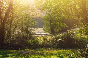 Bright sunny day in forest © Vastram