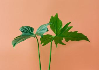 Real leaves on pastel color background.Botanical tropical pattern design concept