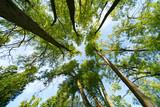 Widok z góry przez pnie drzew z liśćmi