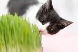 Little kitten eats green grass