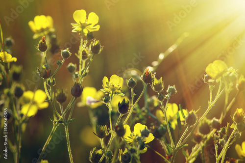Spring flowers on sun Slika na platnu