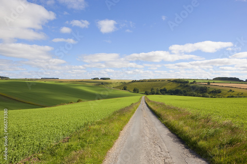 rural road and pea crops