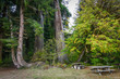 Picnic Area Under Redwoods