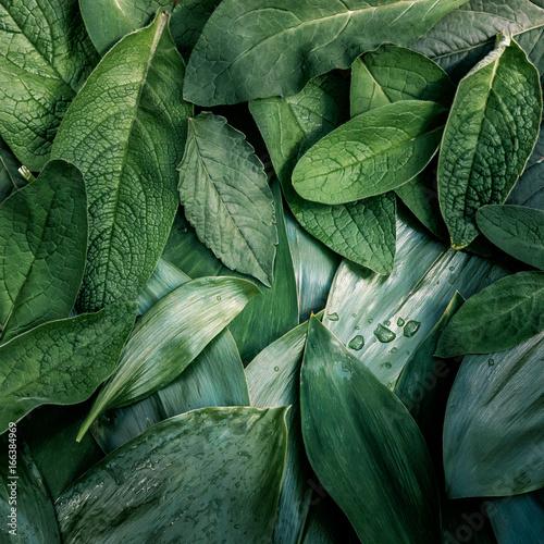 Liścia liścia tekstury zielonego organicznie tła przygotowania makro- zbliżenie tonujący