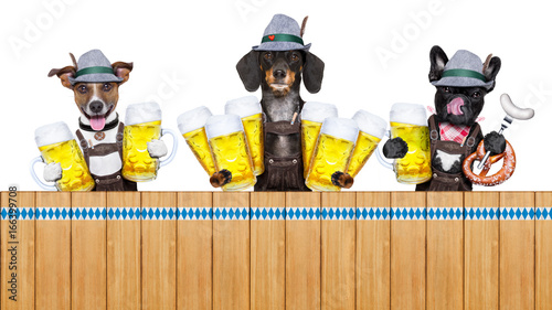 Foto op Canvas Crazy dog bavarian beer dogs row