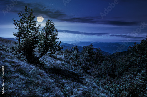 forest on a mountain slope at night Poster
