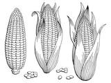 Corn graphic black white isolated sketch illustration vector - 166436356
