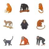 Species of chimpanzee icons set, cartoon style