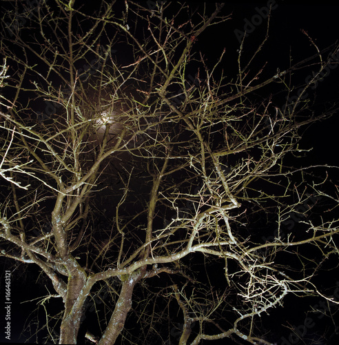 Foto op Plexiglas Brussel A tree in Brussels at night