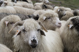 A group of sheep - 166478517