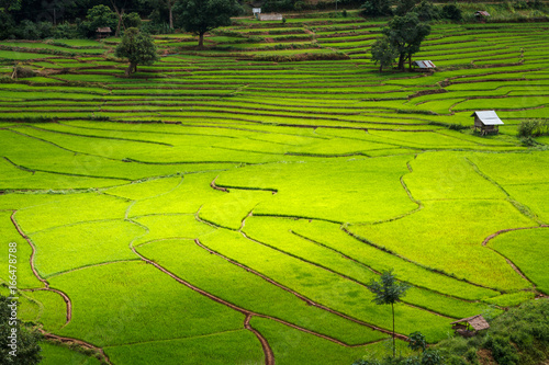 Fotobehang Lime groen Green Terraces rice field, a beautiful natural beauty on mountain in Nan,Khun Nan Rice Terraces, Boklua Nan Province, Thailand