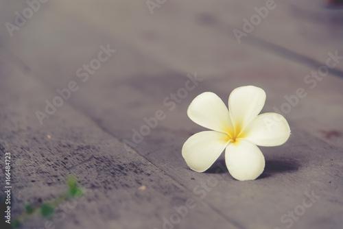 Plumeria flower on a wooden floor.
