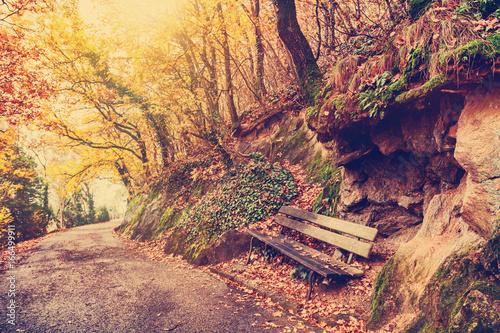 Beautiful bright autumn park, landscape, path in the forest © olezzo