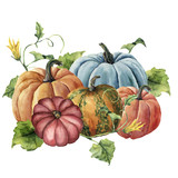 Watercolor autumn harvest. Hand painted bright pumpkins with leaves and flowers isolated on white background. Botanical illustration for design. - 166518711