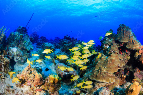 Colorful tropical fish on a coral reef
