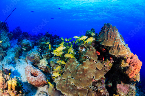 Tuinposter Koraalriffen Beautiful tropical fish on a warm water coral reef