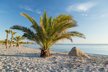 Palmenstrand an der dänischen Küste in Frederikshavn
