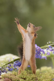 squirrel standing reaching out - 166548595