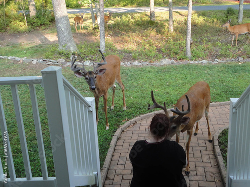 Two whitetail buck deer visiting me in Hawley the Poconos Pennsylvania