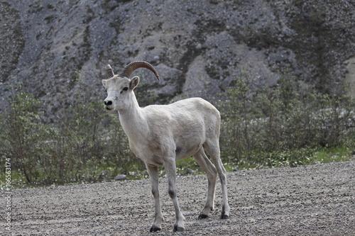 Fotobehang Hert wild life