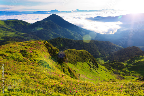 Foto op Canvas Nachtblauw Carpathian Mountains in the morning.