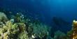 Quadro Scuba divers explore coral garden