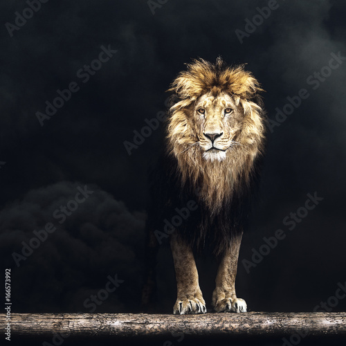 Foto op Aluminium Lion Portrait of a Beautiful lion, lion in the dark smoke
