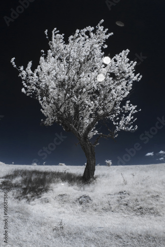 Tuinposter Grijze traf. Infrared photography - mountain landscape and details