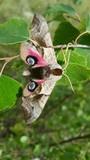 Butterfly - 166601777