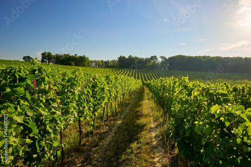 Beautiful vineyards in Moravia, Czech Republic