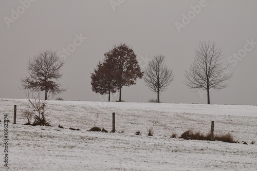 Herbstbäume im Schnee - 166623194