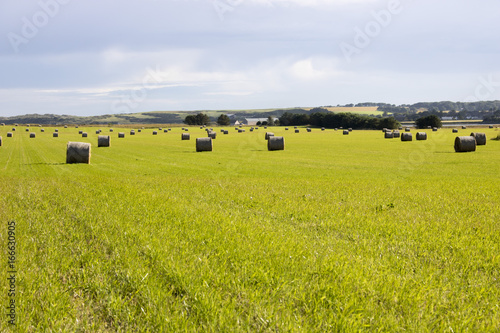 Bales of Hay in Grassy Field