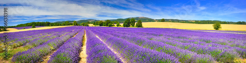 Spoed canvasdoek 2cm dik Panoramafoto s Panorama of lavender field