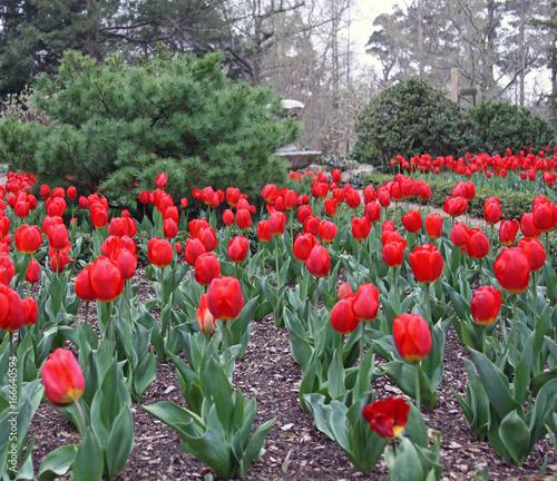 flowers, spring time, garden