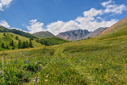 mountains meadow road hills wildflowers
