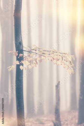 Papiers peints Automne Autumn foggy forest