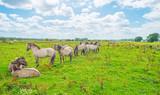 Koń dzików w słońcu w polu latem