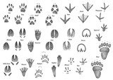 Animal footprint collection illustration, drawing, engraving, ink, line art, vector - 166686307