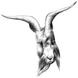 the head sheep with large horns, sketch vector graphics black and white drawing - 166687549