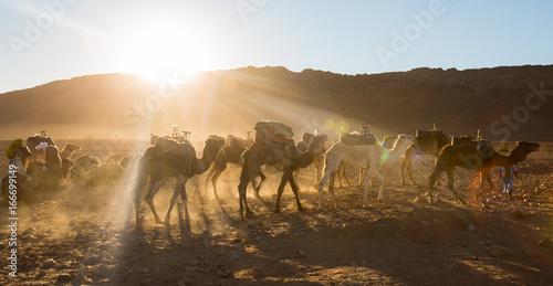 Fotobehang Kameel Sahara Desert Camel Ride