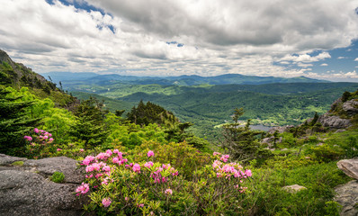 Rhododendron on Grandfather Mountain - off the Blue Ridge Parkway