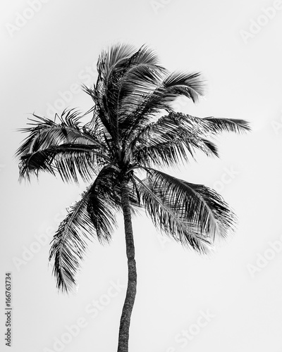 Palm Tree Silhouette - 166763734