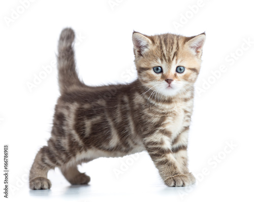 Poster Young cat side view looking directly to camera isolated on white